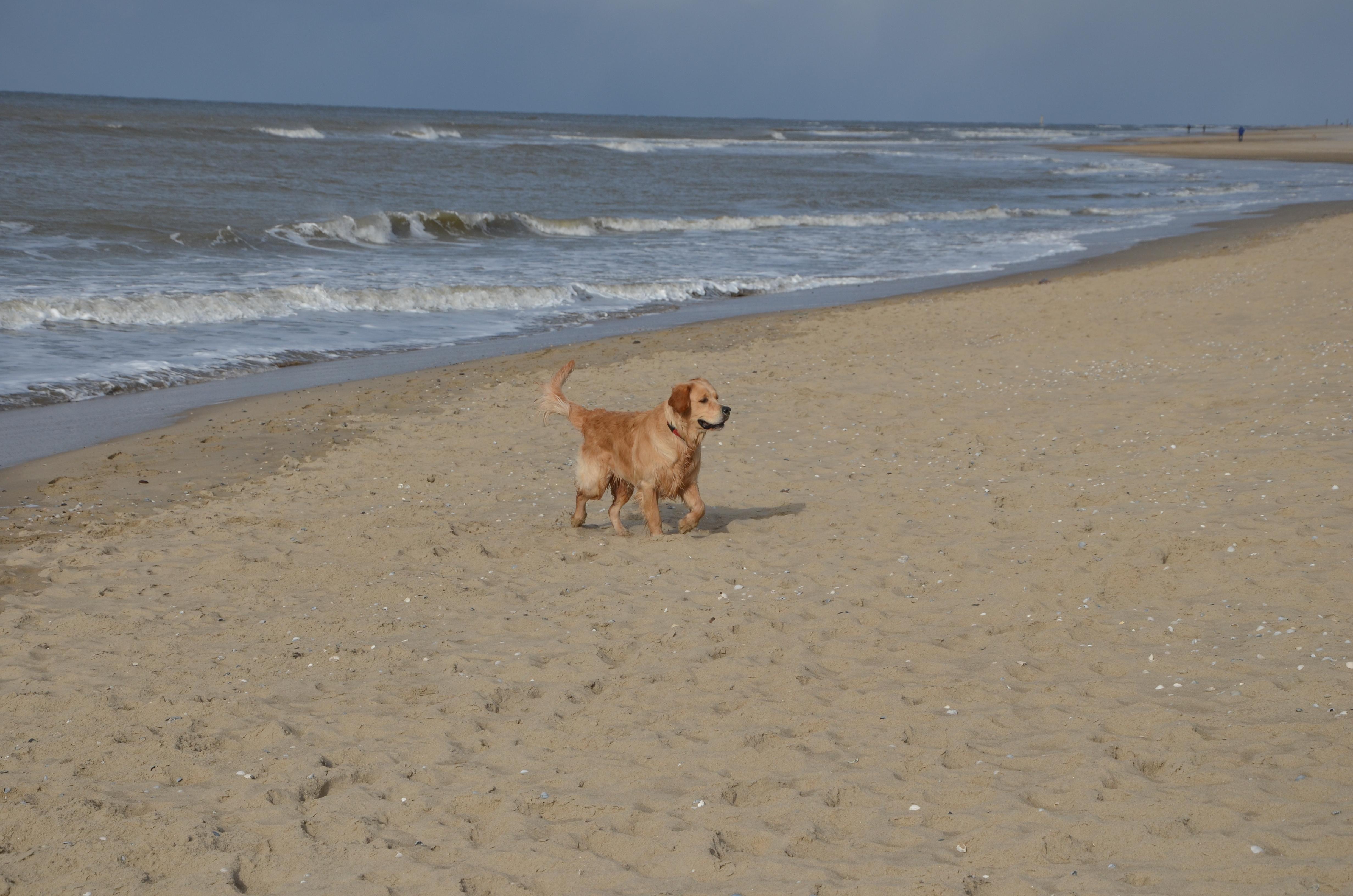Strand Texel-1