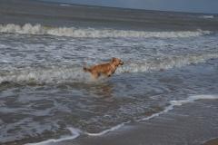 Strand Texel-2