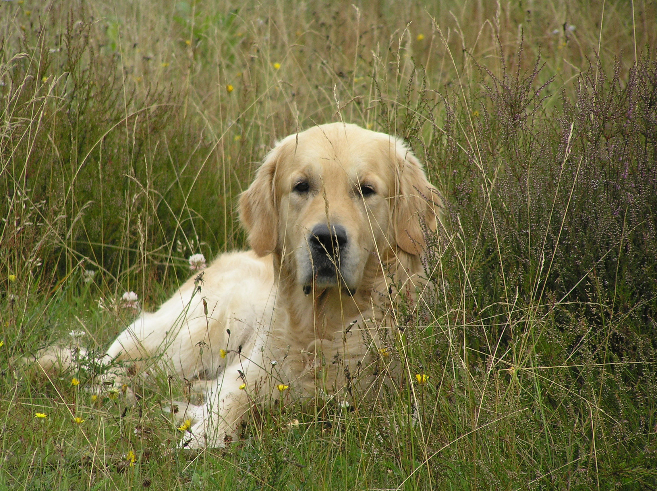 Commando 'Blijf' oefenen in het hoge gras