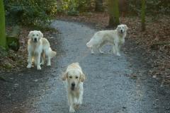 Sky, Guus & Buddy