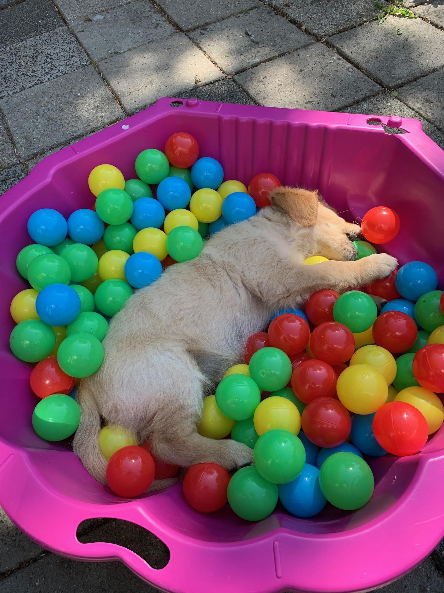 Slapen in de ballenbak