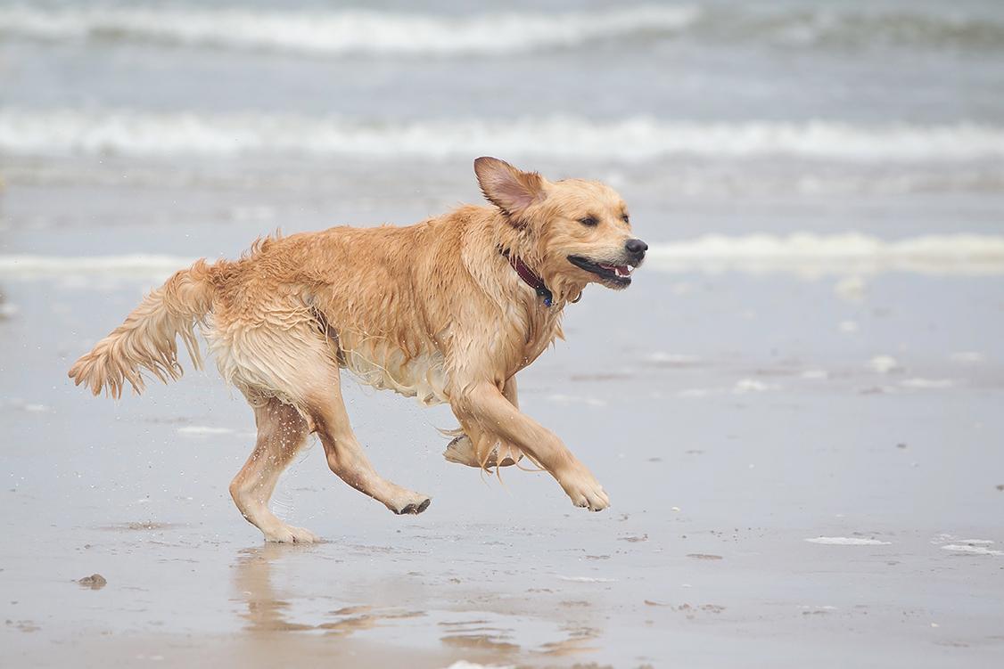 Rennen op het strand