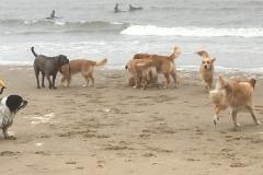 Heerlijk op strand.